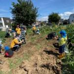 収穫祭芋掘り